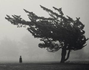 shaken tree
