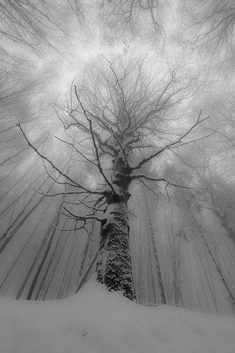 Winterage